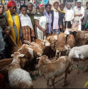 Eritrea: 'A goat for a family' project